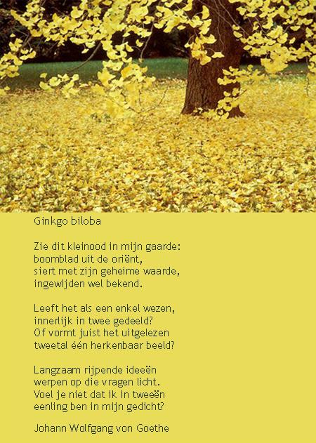 Goethe Ginko